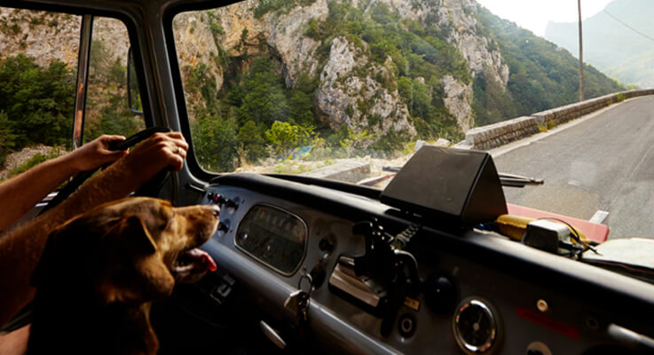 Your pet can live a happy and healthy life on the road with you as long as you properly take care of them.