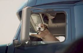 Bringing pet on the road with you can be incredibly beneficial.